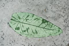green leaf impression in a cement sidewalk - stock photo