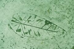 leaf impression in a cement green sidewalk - stock photo