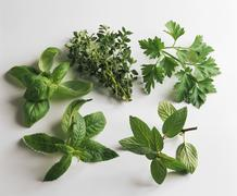 Still life with various culinary herbs - stock photo