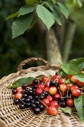 Various types of cherries with leaves in basket Stock Photos