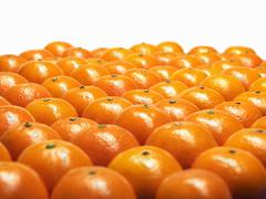 Stock Photo of Mandarin oranges in rows