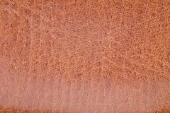 animal skin texture. - stock photo