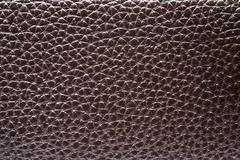 reptile skin texture. - stock photo