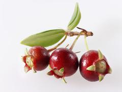 Chilean guava berries on twig Stock Photos