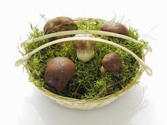 Five bay boletes in a basket of moss Stock Photos