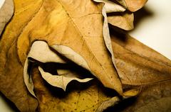 Varnish Leaves in the Fall - stock photo