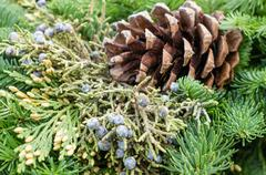 Stock Photo of evergreen decoration with pine cone