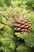 evergreen decoration with pine cone - stock photo