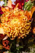 bronze chrysanthemum flower in arrangement - stock photo