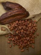 Cocoa pods and cocoa beans Stock Photos