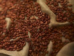 Cocoa beans on jute Stock Photos