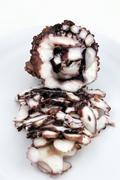 Squid carpaccio - stock photo
