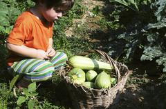 A little boy sitting in front of a basket of freshly picked courgettes - stock photo
