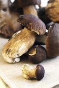 Stock Photo of Fresh cep mushrooms