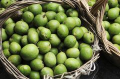 Freshly picked green walnuts in baskets Stock Photos