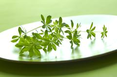 Fresh woodruff Stock Photos