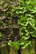 Stock Photo of Assorted Lettuce at a Market