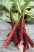 Stock Photo of Several sticks of rhubarb