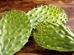 Cactus Pads - stock photo