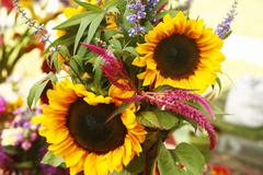 Organic Sunflower Bouquet at a Farmers Market - stock photo