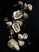 Raw oysters with ice cubes on a black surface - stock photo