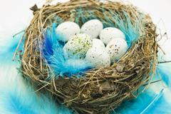 Stock Photo of Chocolate Easter eggs and blue feathers in an Easter nest