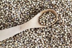 Coriander seeds (full frame) - stock photo