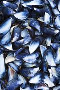 Mussel shells Stock Photos