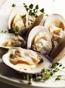 Steamed Middle Neck Clams with Sprigs of Fresh Oregano Stock Photos
