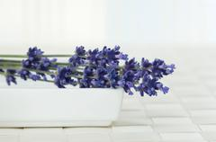 Lavender flowers in a bowl Stock Photos