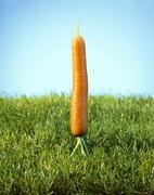 A carrot on grass Stock Photos