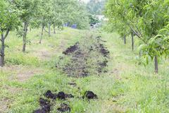 Organic orchard fertilizer Stock Photos