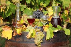 Red and white wine autumn scene.JPG Stock Photos