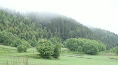 Foggy forest Stock Footage