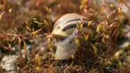 Stock Video Footage of Macro snail crawling