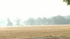 Misty Morning Stock Footage