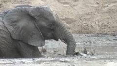 ELEPHANT MUD SPLASH Stock Footage