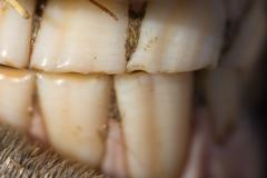horse's teeth as a background. macro - stock photo