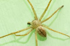 spider on the wall. macro - stock photo