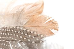 Stock Photo of feather on a white background