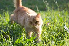 Ginger cat in nature Stock Photos