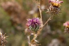 Stock Photo of round dry flower