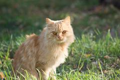 ginger cat in nature - stock photo