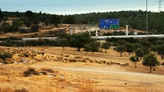 645b man sheperds his sheeps next to a highway in stop motion Stock Footage