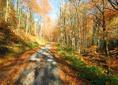 autumn mountain dirty road - stock photo