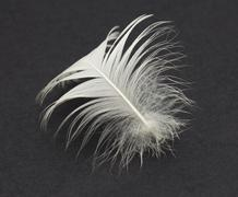 Stock Photo of feather on a black background