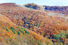 autumn mountain forest - stock photo