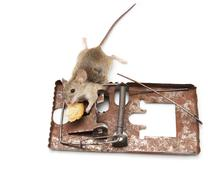 mouse in a mousetrap on a white background - stock photo