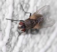 fly. macro - stock photo