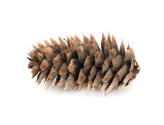 fir-cone on a white background - stock photo